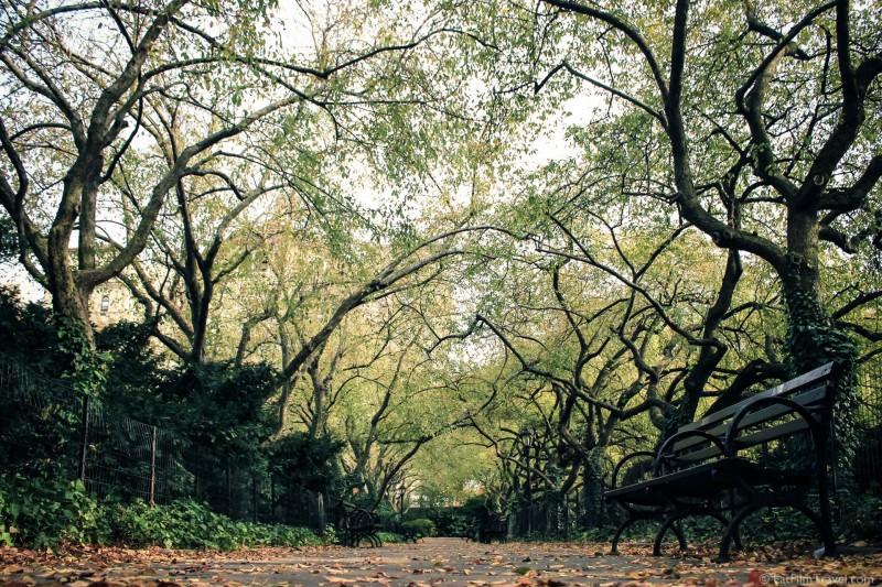 New york central park-8
